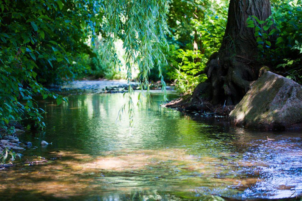 Dietenbachpark Den Märchenwald vor der Tür