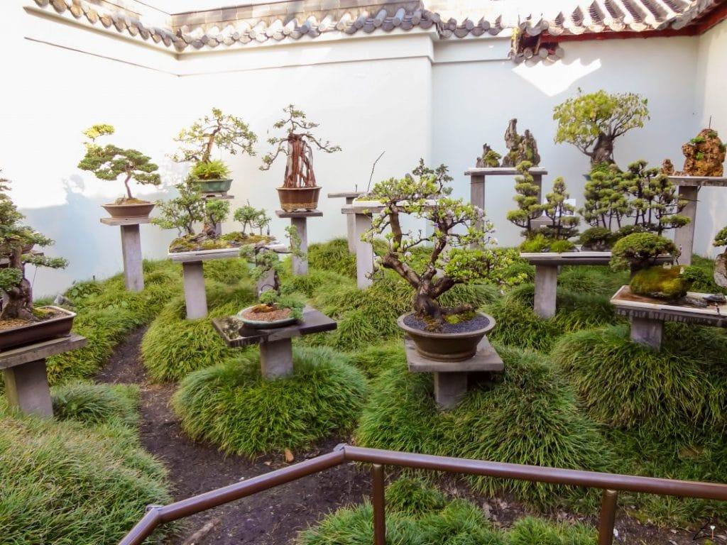 Der Chinesische Garten in Sydney