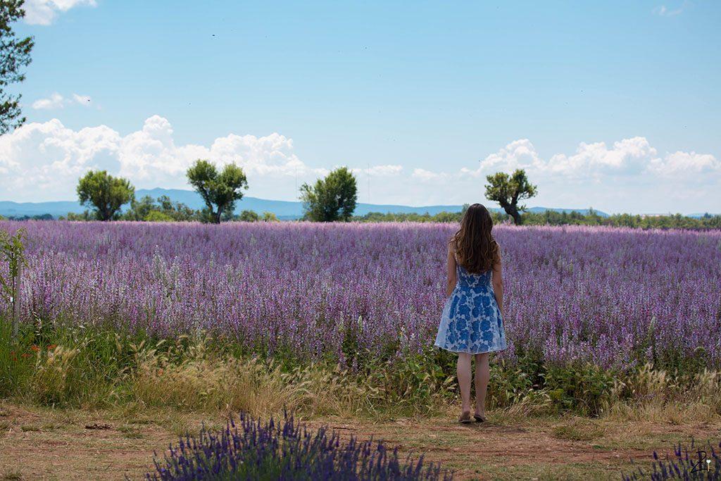 Die Lavendelblüte in Valensole © Angelina Antal