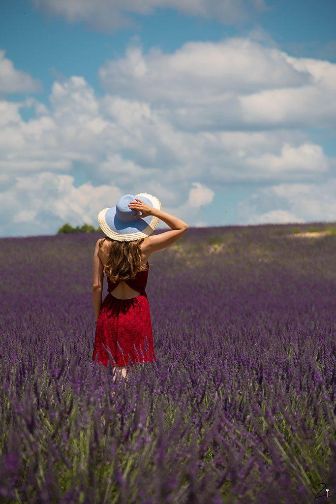 Die Lavendelblüte in Valensole