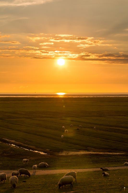 Sonnenuntergang auf dem Deich in Sankt Peter Ording