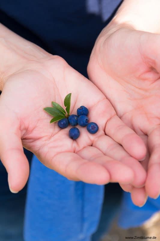 Wilde Heidelbeeren in der Hand