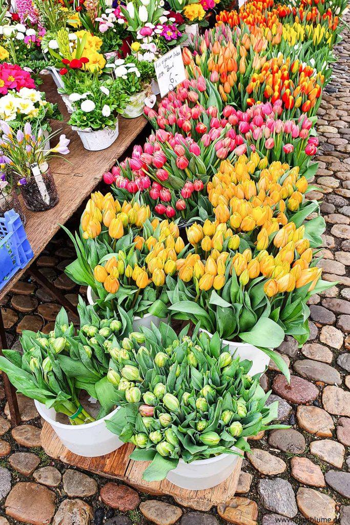 Münstermarkt Freiburg Tulpen